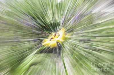 Photograph - Flower Power by Ronald Grogan