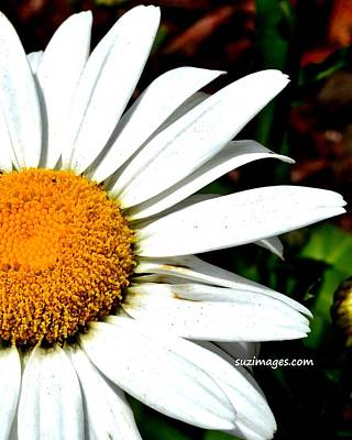 Photograph - Flower Power by Susie Loechler