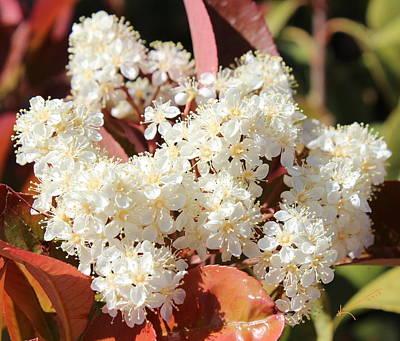 Flower Puffs Print by Kume Bryant