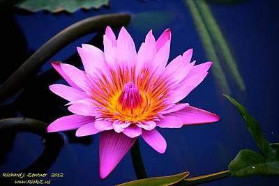Photograph - Flower by Richard Zentner