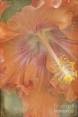 Photograph - Flower Showers by Sharon Mau