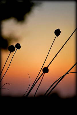 Photograph - Flower Silhouettes I by Kathy Sampson