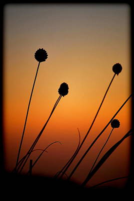 Photograph - Flower Silhouettes II by Kathy Sampson