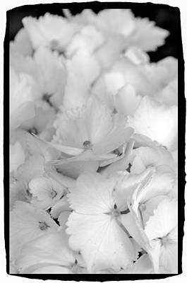 4th Of July 2013 Photograph - Flower Six by Craig Perry-Ollila