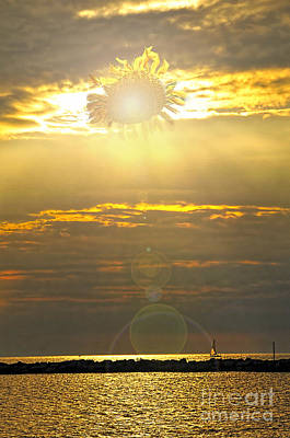 Photograph - Flower Sun by David Arment