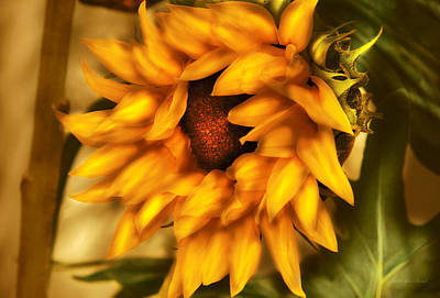Photograph - Flower - Sunflower - The Sunflower by Mike Savad