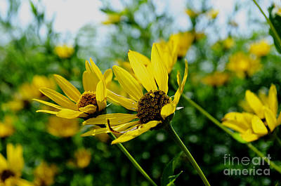 Flower - Sunning Sunflowers - Luther Fine Art Art Print