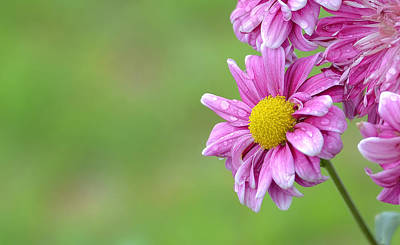 Photograph - Flower by Tin Lung Chao