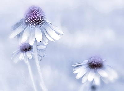 Photograph - Flower Trio  by Andrea Kollo