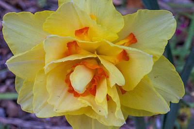 Photograph - Flower Twenty Three by Walt  Baker