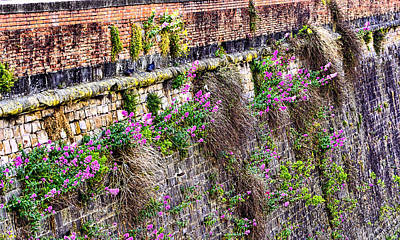 Flower Wall Along The Arno River- Florence Italy Art Print by Jon Berghoff