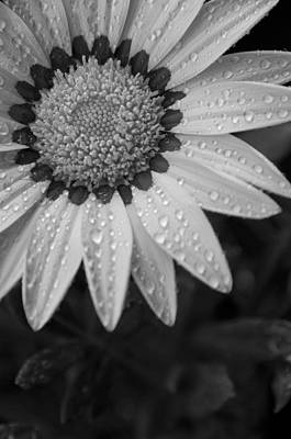 Flower Water Droplets Art Print