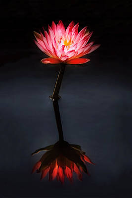 Color On Black Photograph - Flower - Water Lily - Nymphaea Jack Wood - Reflection by Mike Savad