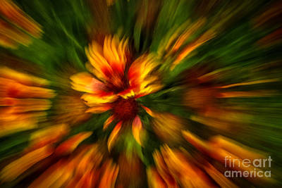 Photograph - Flower Zoom Abstract by Grace Grogan