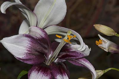 Photograph - Flower1 by Paul Ross