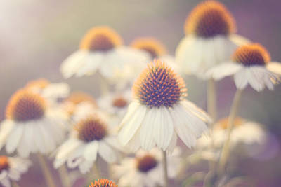 Coneflowers Photograph - Flowerchild by Amy Tyler