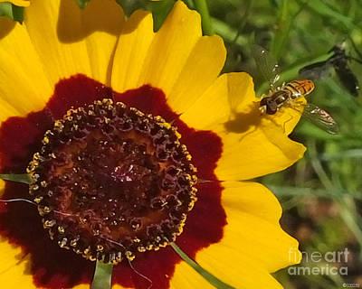 Ps I Love You - Flowered Bee Fly by Lizi Beard-Ward