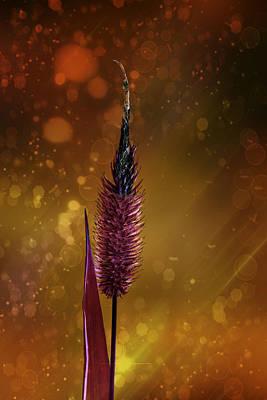 Flowered Blade Of Grass Art Print