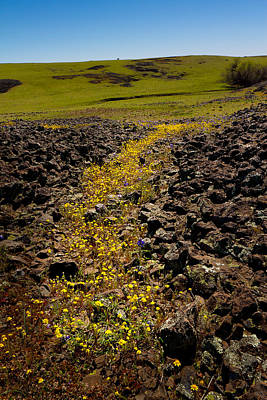 Photograph - Flowered Path Through The Rocks by Robert Woodward