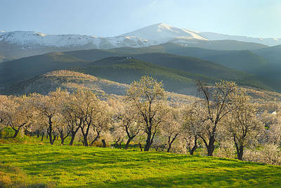 Almond Photograph - Flowering Almond At The Mountains by Guido Montanes Castillo