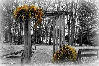 Art Print featuring the photograph Flowering Archway by Tara Potts