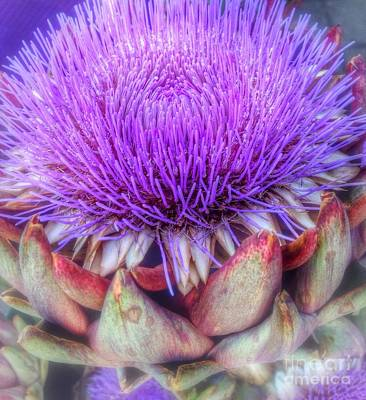 Photograph - Flowering Artichoke  by Susan Garren
