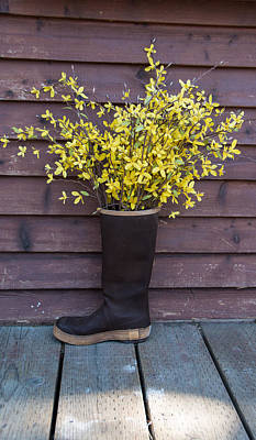 Photograph - Flowering Boot by Marilyn Wilson