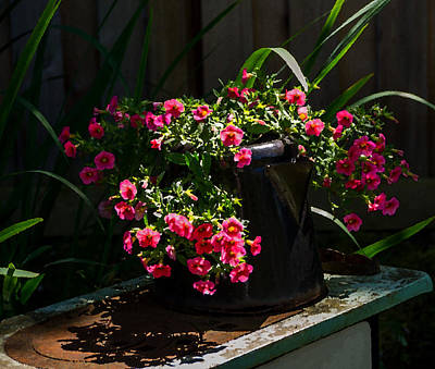Photograph - Flowering Coffee Pot by Jordan Blackstone