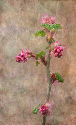 Flowering Currant Art Print