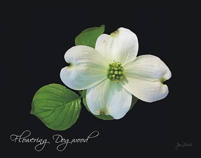 Photograph - Flowering Dogwood by Joe Duket