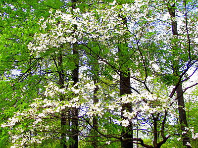 Photograph - Flowering Dogwood Tree by Pamela Hyde Wilson