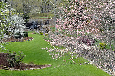 Flowering Dogwoods In Cleveland Park's Rock Quarry Falls  Art Print