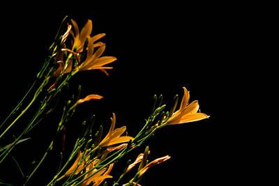 Flowering Golds II Art Print by Kathi Isserman