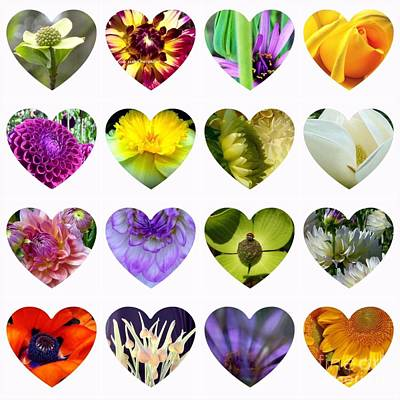 Photograph - Flowering Hearts Gather by Susan Garren