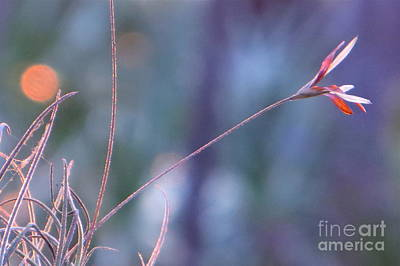 Photograph - Flowering Moss by Joy Hardee