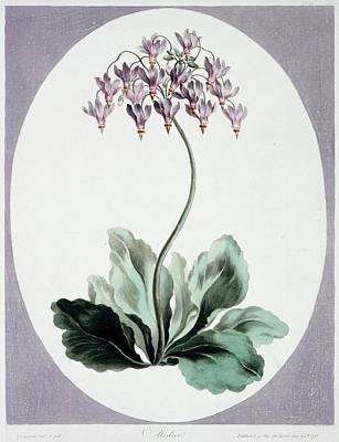Flowering Plant Art Print by Natural History Museum, London/science Photo Library