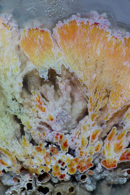 Darrell Gulin Photograph - Flowering Plume Agate, Quartzsite by Darrell Gulin