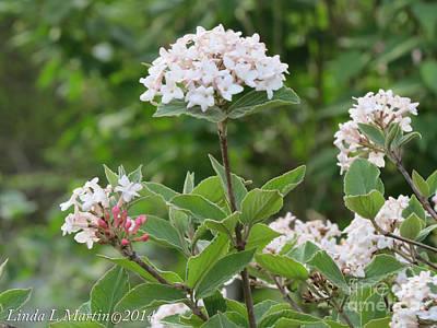 Painting - Flowering Shrub 2 by Linda L Martin