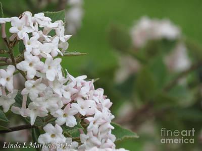 Photograph - Flowering Shrub 4 by Linda L Martin