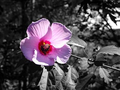 Flowering Art Print by Tom DiFrancesca
