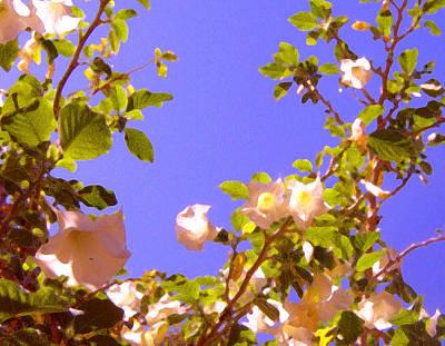 Colored Pencils - Flowering Tree 2 by Amy Vangsgard
