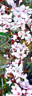 Jerry Sodorff Royalty-Free and Rights-Managed Images - Flowering Trees 22230 L PE by Jerry Sodorff