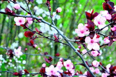 Jerry Sodorff Royalty-Free and Rights-Managed Images - Flowering Trees 22241 PK by Jerry Sodorff
