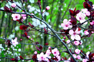 Jerry Sodorff Royalty-Free and Rights-Managed Images - Flowering Trees PE 22241 by Jerry Sodorff