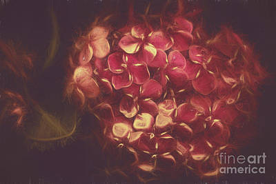 Photograph - Flowering Unity In Collective Closeness by Jorgo Photography - Wall Art Gallery
