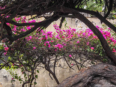 Photograph - Flowering Vine On Stone Wall by Karen Zuk Rosenblatt