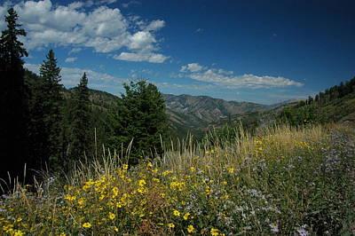 Flowering Yellowstone Art Print