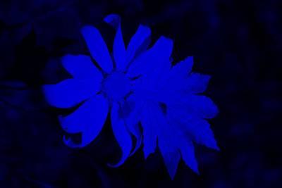 Modern Kitchen - Flowerleaf Blue by Rob Hans