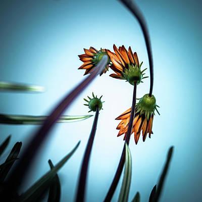 Photograph - Flowerlove by