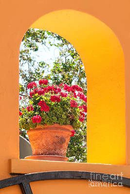 Photograph - Flowerpot In A Mexican Wall by David Perry Lawrence